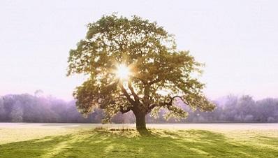 Baum, Natur, Landhaus, Land, Idylle